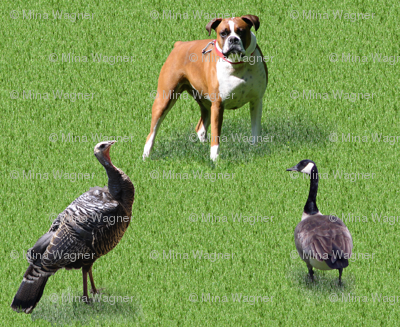 Dogs turkeys & geese on grass