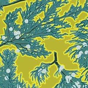 Juniper Berries Yellow-Brown