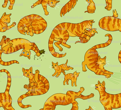 Marmalade Cats & Kittens
