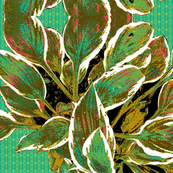 Hosta Waltz - Limited Palette
