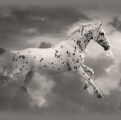 Cloud Runner Fantasy Horse in the Clouds