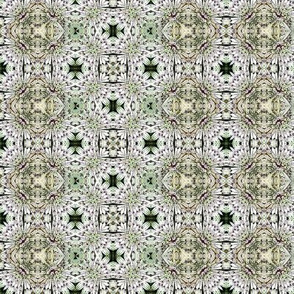 Persian astrantia