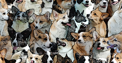Corgi crowd