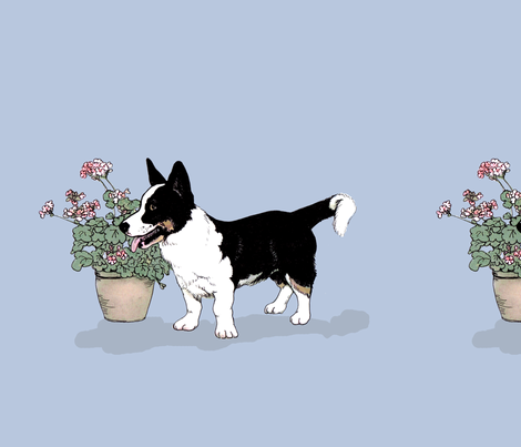 Tricolor Cardigan Welsh Corgi