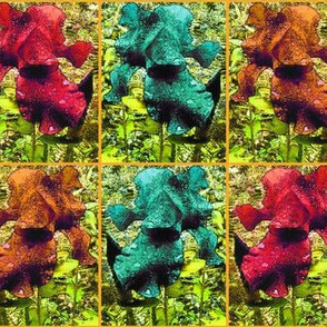 Giant Iris-Blythe