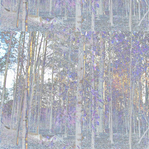 WoodsSolarized