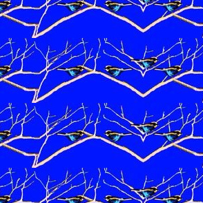 Blue Birds in Colrain