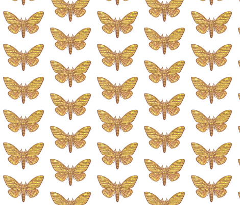 Emperor Moth fabric by holiday on Spoonflower - custom fabric