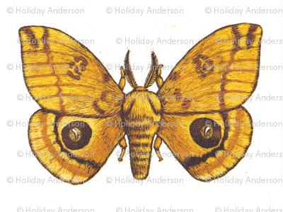 Big Io Moth