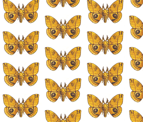 Big Io Moth fabric by holiday on Spoonflower - custom fabric