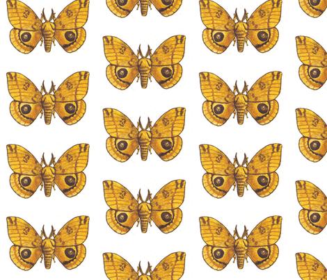 Big Io Moth fabric by holiday on Spoonflower - custom fabric