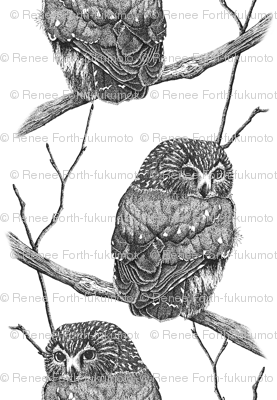 Sawhet Owl Pen n Ink Pointillism Large