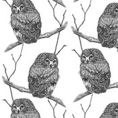Rrsawhet_owl_ink_4_shop_thumb