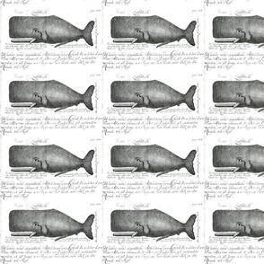 Animal-Sea-mammal-Whale-Dutch-engraving