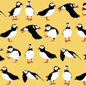 Rryellow_puffins_sf_2560_shop_thumb