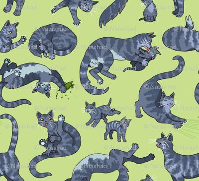 Grey Tiger Cats