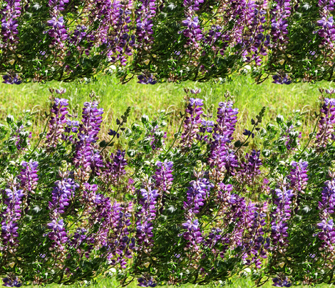 California lupines fabric by mina on Spoonflower - custom fabric