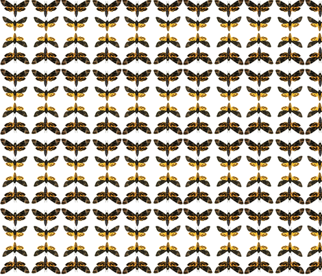 Moths fabric by ravynka on Spoonflower - custom fabric