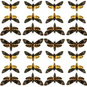 Rrrrtiling_death-head-moth-big_1_shop_thumb