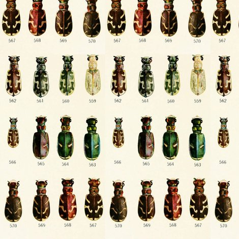Rrrold_print_beetles_shop_preview