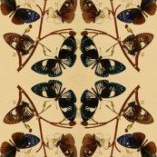 Rrtiling_butterflies-rare-book-oriental-entymology-plate-01_1_shop_thumb