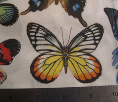 Rrrrbutterfly_collage_for_fabric_comment_95151_preview