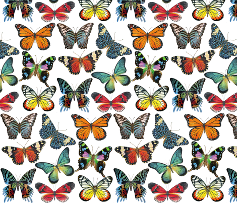 Butterfly Paintings fabric by angelaanderson on Spoonflower - custom fabric