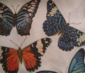 Rrrrrbutterfly_collage_for_fabric_comment_95148_thumb