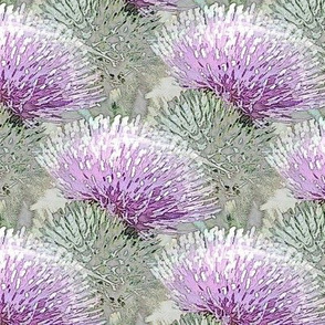 Pale purple thistle
