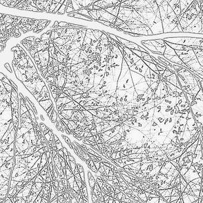 Forest's veins