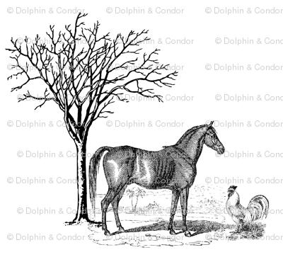 Horse n Cock