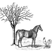 Rrhorsencock.pdf_shop_thumb