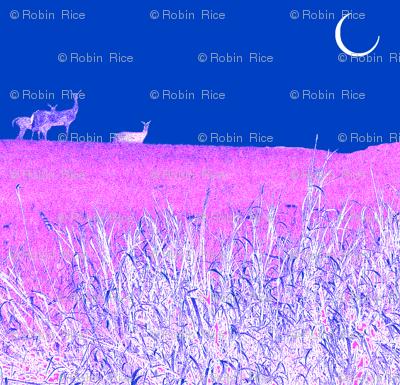 Moonlight Deer