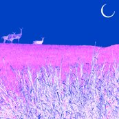 Moonlight_deer_shop_thumb
