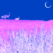 Moonlight Deer