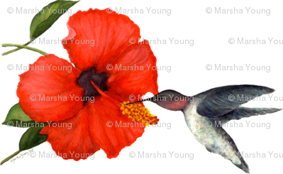 watercolor_hibiscus_and_hummingbird