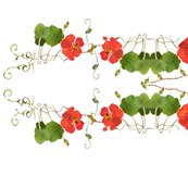 Nasturtium-chairbk-red_shop_thumb