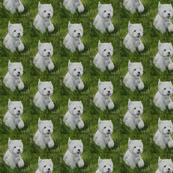 Westie in the Grass