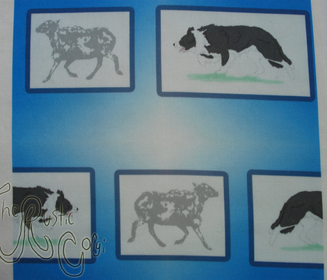 Border Collies herding portrait - blue