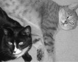 Rrrcats_thumb