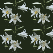 pattern_lilies black white