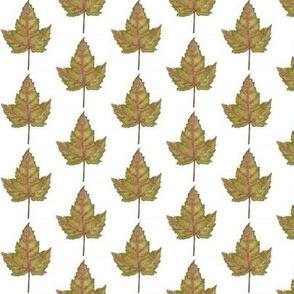 watercolour maple leaf