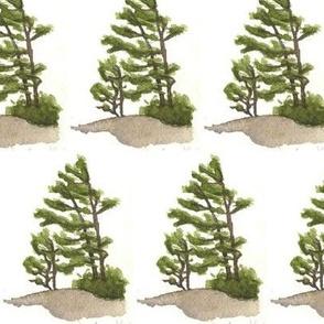 watercolour pines