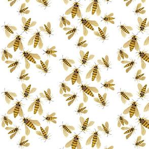Hornet Moths