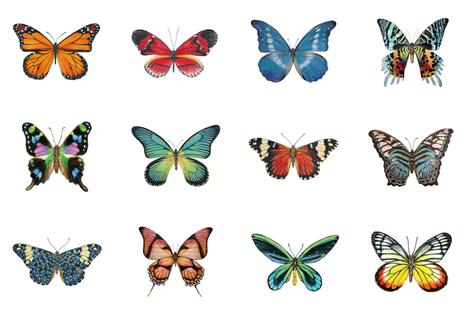 Large Butterflies for Pillows fabric by angelaanderson on Spoonflower - custom fabric