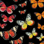 Rrrrrorange_butterflies_fabric_on_black_shop_thumb