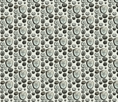 Sand Dollars fabric by susaninparis on Spoonflower - custom fabric