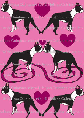 Tiny Little Kissing Boston Terriers