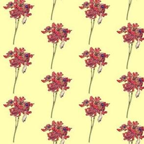 Woodland Peony Seed Pod - Yellow Background