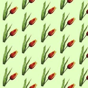 Tulips on Green